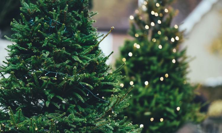 Trends für Weihnachten